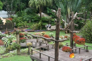 สวนสวย บนดอยตุง